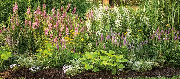 ten versatile new flowers for landscapes and containers for, Natural flower
