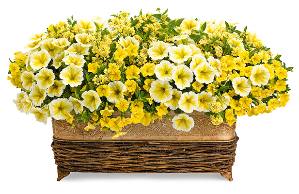 ... Your Hanging Baskets, Patio Planters And Combination Containers. It  Doesnu0027t Require Deadheading To Keep Right On Blooming And Is Disease  Resistant Too.