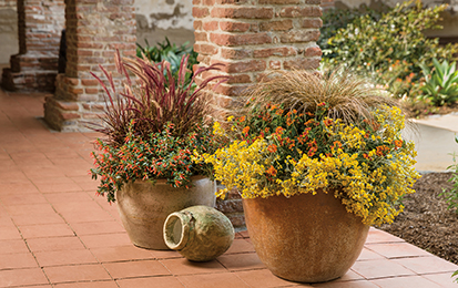 Ornamental Grasses In Containers Ornamental grasses for inspired designs proven winners purple fountain grass and graceful grasses toffee twist sedge in these containers workwithnaturefo