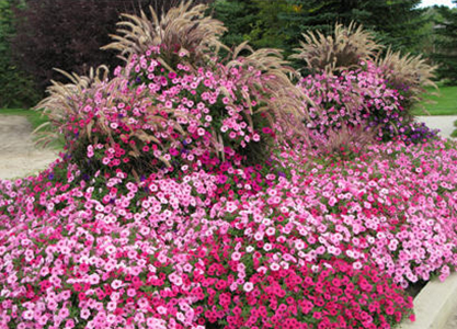 ten toprated annual flowers for easy maintenance  proven winners, Beautiful flower