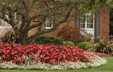 ten toprated annual flowers for easy maintenance  proven winners, Beautiful flower
