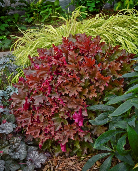 perennials that burst into color for fall  proven winners, Natural flower