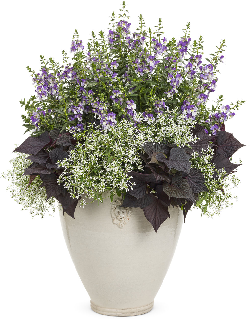 Annuals some for shade some for height and some that smell so catalina grape o licious is has pure white flowers with a deep purple throat the green foliage and mounding habit is great in combinations as well as izmirmasajfo Images