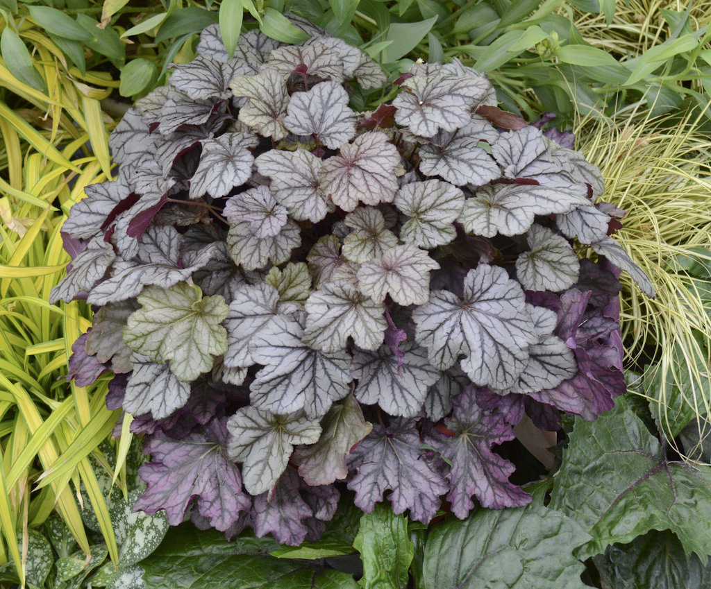 How to plant ground cover for shady areas - Winning The Battle Perennials That Thrive In Shade