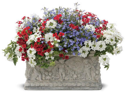 Patriotic flowers and combinations proven winners show your patriotic colors with these red white and blue plants and combinations for your containers and gardens then take a look at our patriotic mightylinksfo Image collections