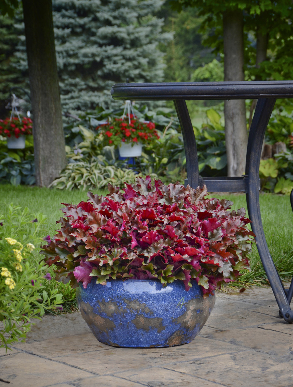 florida container plants flowers container gardening ideas